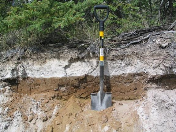 An 8-inch thick (20 cm) layer of volcanic ash from the White River eruption is exposed in Canada's Yukon Territory between Whitehorse and Dawson CIty.