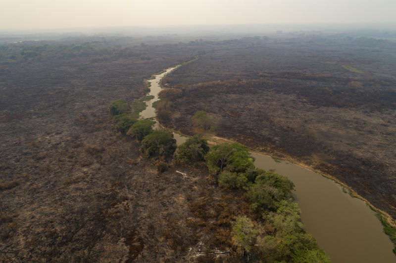 An recently burned area at the Encontro das Aguas park at the Pantanal wetlands near Pocone, Mato Grosso state, Brazil, Saturday, Sept. 12, 2020. Wildfire has infiltrated the state park, an eco-tourism destination known for its population of jaguars. (AP Photo/Andre Penner)