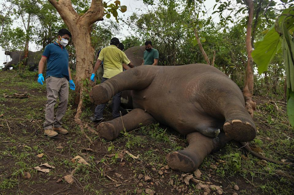 <p>A veterinarian team checks the dead bodies of elephants on a hillside in Nagaon district of Assam on 14 May, 2021</p> (AFP via Getty Images)