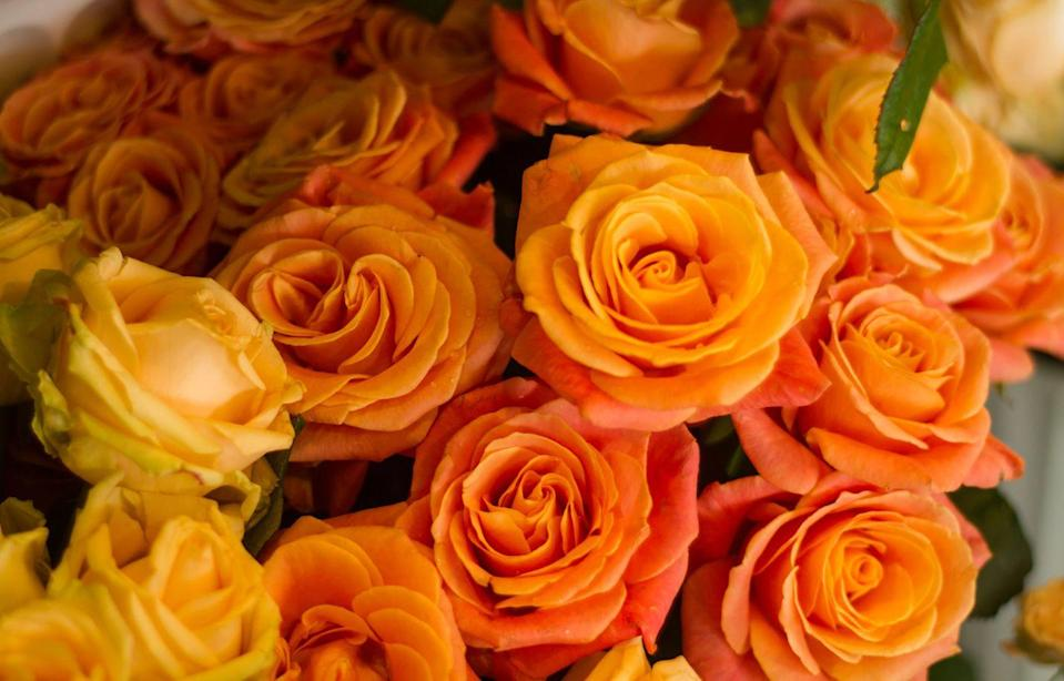 """<p>An energetic, curious color comes with a meaning to match: <a href=""""https://www.proflowers.com/blog/rose-colors-and-meanings"""" rel=""""nofollow noopener"""" target=""""_blank"""" data-ylk=""""slk:enthusiasm and passion."""" class=""""link rapid-noclick-resp"""">enthusiasm and passion.</a></p><p><a class=""""link rapid-noclick-resp"""" href=""""https://go.redirectingat.com?id=74968X1596630&url=https%3A%2F%2Fwww.fromyouflowers.com%2Fproducts%2Fone_dozen_orange_roses.htm&sref=https%3A%2F%2Fwww.goodhousekeeping.com%2Fholidays%2Fvalentines-day-ideas%2Fg1352%2Frose-color-meanings%2F"""" rel=""""nofollow noopener"""" target=""""_blank"""" data-ylk=""""slk:SHOP ORANGE ROSES"""">SHOP ORANGE ROSES</a> </p>"""