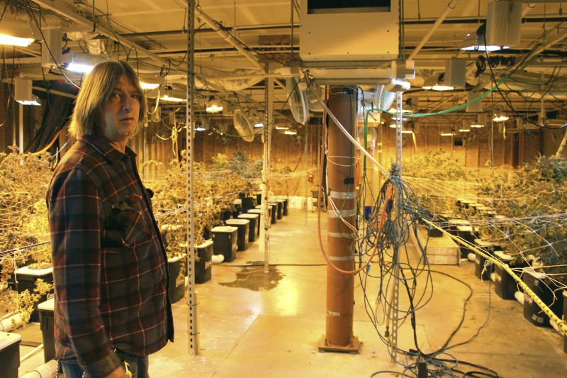 CORRECTS TO SAY THE FUTURE OF HIS BUSINESS IS HAZY - Alaska marijuana grower Dane Wyrick poses for photos at his Danish Gardens cultivation and retail location in Anchorage, Alaska, Monday, Aug. 26, 2019. Wyrick said the future of his business is hazy, in part because of the tax the state of Alaska places on cultivators, which bear the burden of the taxation in the market. (AP Photo/Mark Thiessen)