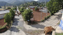 In this photo taken June 4, 2021 and released by the Yunnan Forest Fire Brigade, a migrating herd of elephants roam through a neighborhood near the Shuanghe Township, Jinning District of Kunming city in southwestern China's Yunnan Province. Already famous at home, China's wandering elephants are now becoming international stars. Major global media, including satellite news stations, news papers and wire services are chronicling the herd's more-than year-long, 500 kilometer (300 mile) trek from their home in a wildlife reserve in mountainous southwest Yunnan province to the outskirts of the provincial capital of Kunming. (Yunnan Forest Fire Brigade via AP)