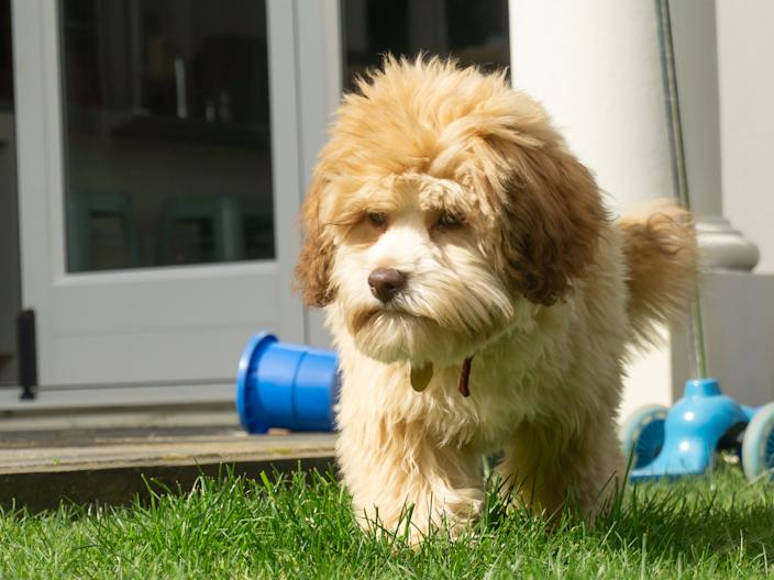 If you're bringing your pet outside, ensure they have water and access to a shaded area.