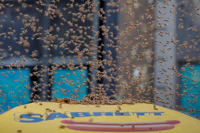A swarm of bees land on a hot dog cart in Times Square in New York City, U.S., August 28, 2018. REUTERS/Brendan McDermid