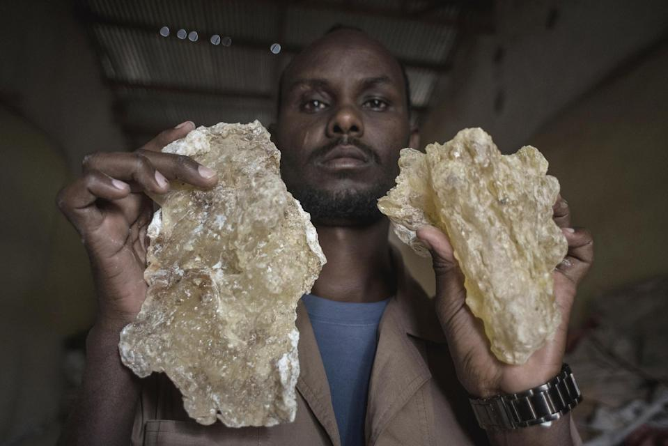 In this Saturday Aug. 6, 2016, photo, a man holds up two large tears of maydi, the large, most expensive chunks of frankincense resin, in Burao, Somaliland, a breakaway region of Somalia. These last wild frankincense forests on Earth are under threat as prices have shot up in recent years with the global appetite for essential oils, and overharvesting has led to the trees dying off faster than they can replenish, putting the ancient resin trade at risk.(AP Photo/Jason Patinkin)