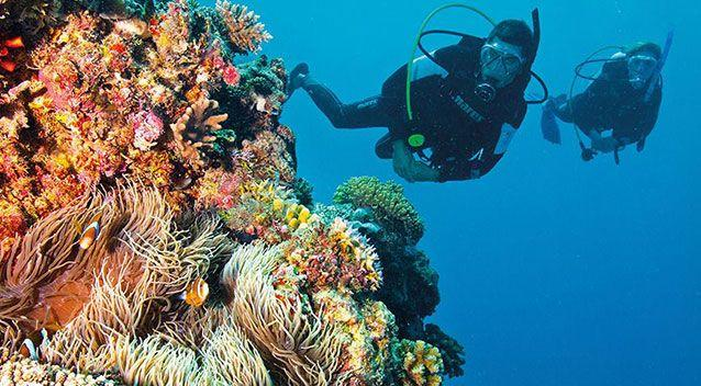 Last year swathes of coral to the north of the reef succumbed to devastating bleaching, due to warming sea temperatures.