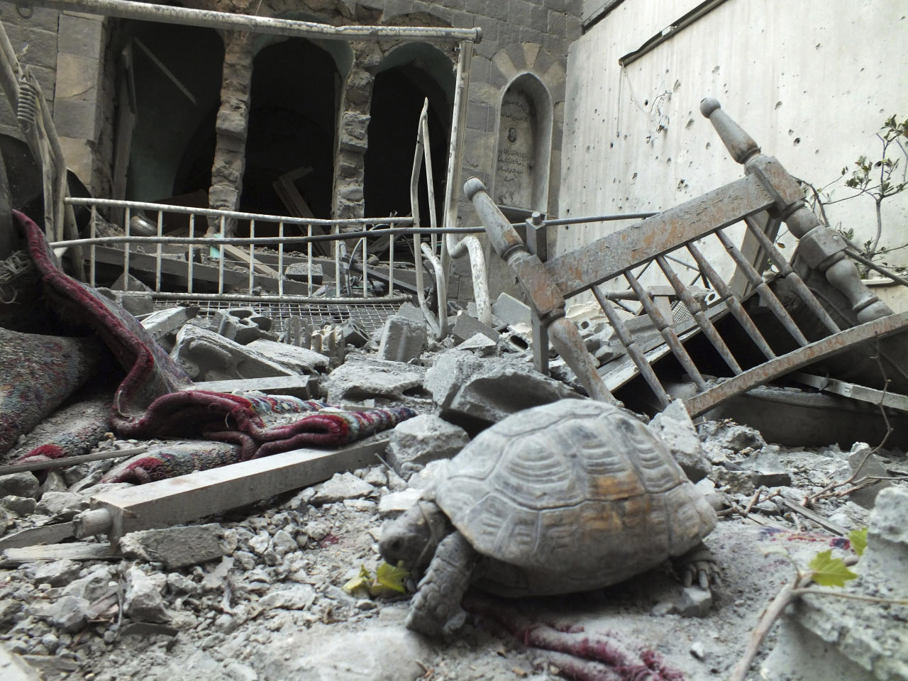 An abandoned pet tortoise walks on the debris of a damaged house in the neighbourhood of old Homs September 9, 2012. Picture taken September 9, 2012. REUTERS/ Yazen Homsy   (SYRIA - Tags: ANIMALS POLITICS CIVIL UNREST)