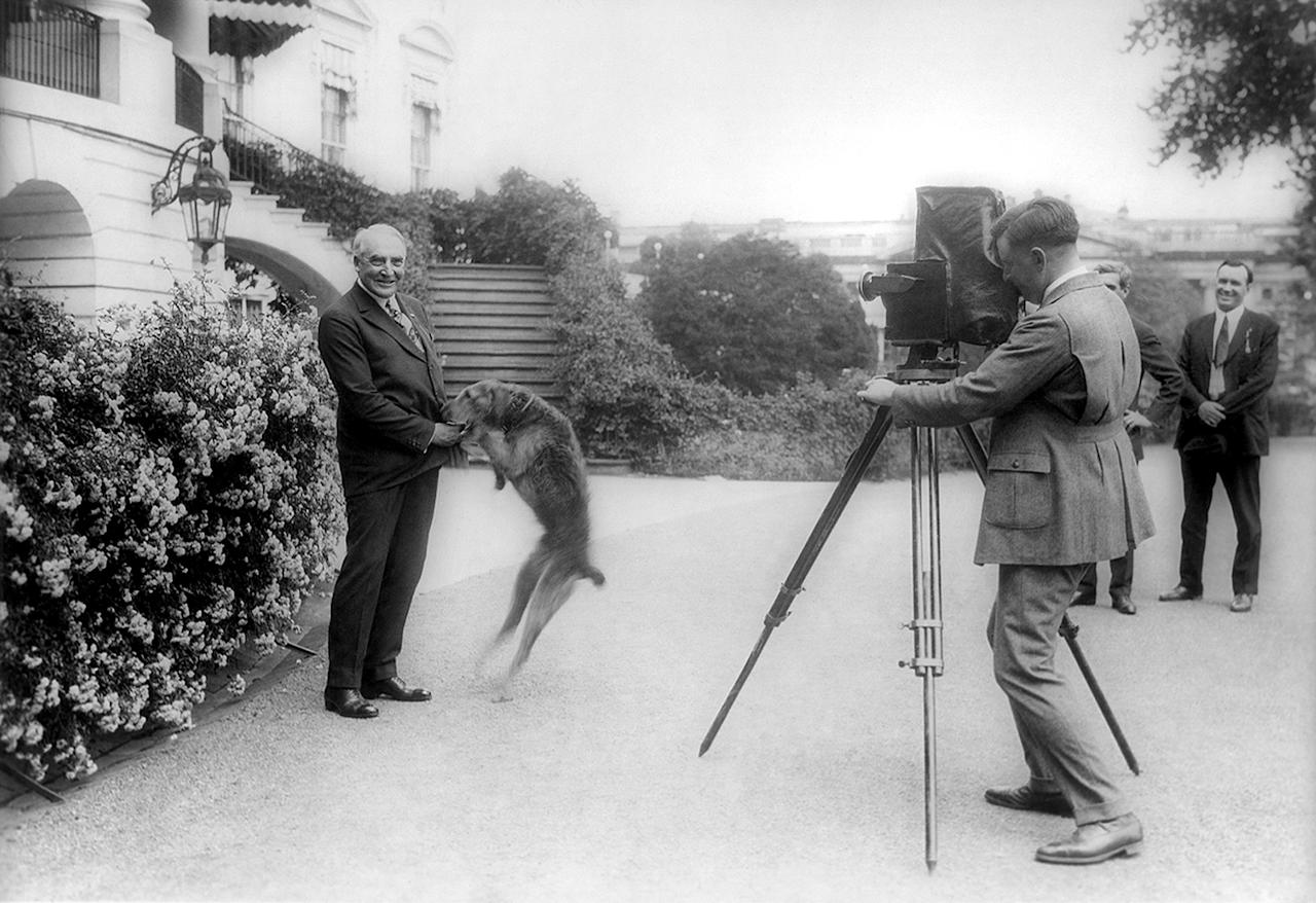 President Warren G. Harding plays with his pet airedale Laddie Boy outside the White House, June 13, 1922. (AP Photo/Library of Congress)
