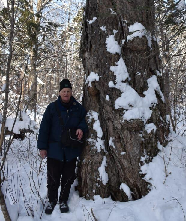 Rod O'Connell stands next to the big yellow birch tree near Portage Lakes. (Submitted by Rod O'Connell - image credit)