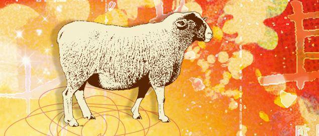Montage of the Chinese year of the Sheep