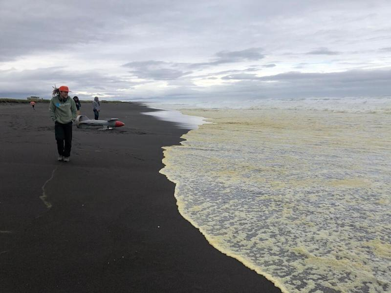 Russia: Greenpeace, disastro ambientale in corso in Kamchatka
