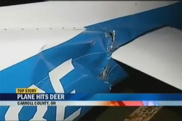 Plane hits deer at airport and crashes on runway
