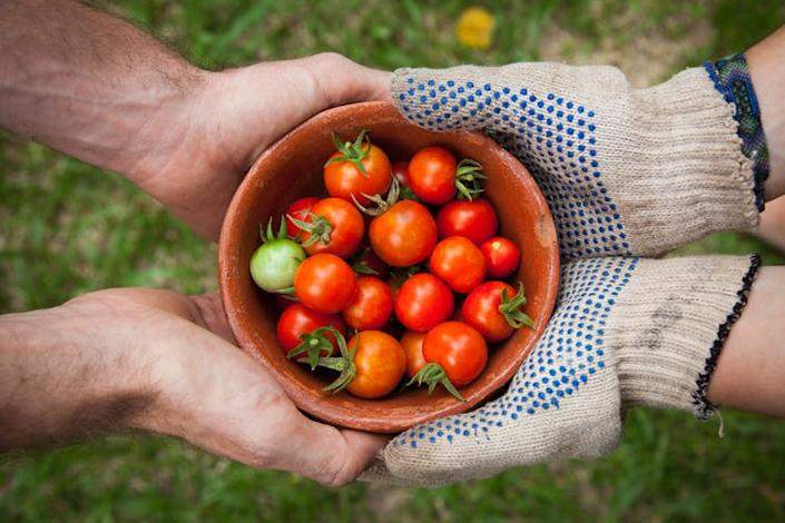 """<span class=""""caption"""">Combating food security and loneliness at once.</span> <span class=""""attribution""""><a class=""""link rapid-noclick-resp"""" href=""""https://unsplash.com/photos/qgHGDbbSNm8"""" rel=""""nofollow noopener"""" target=""""_blank"""" data-ylk=""""slk:Elaine Casap/Unsplash"""">Elaine Casap/Unsplash</a>, <a class=""""link rapid-noclick-resp"""" href=""""http://artlibre.org/licence/lal/en"""" rel=""""nofollow noopener"""" target=""""_blank"""" data-ylk=""""slk:FAL"""">FAL</a></span>"""