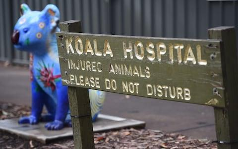 <span>The Port Macquarie Koala Hospital called the incident a 'national tragedy'</span> <span>Credit: PETER PARKS/AFP </span>