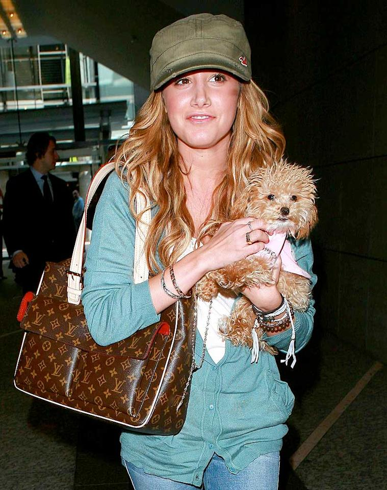 """Ashley Tisdale was spotted shopping in Century City with a furry friend on Tuesday. Just one day earlier, Disney announced that Tisdale and her """"High School Musical"""" costars officially signed on for the big screen version of the popular franchise. MWD/<a href=""""http://www.x17online.com"""" target=""""new"""">X17 Online</a> - January 15, 2008"""