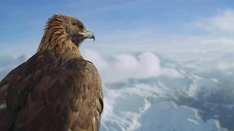 Golden eagle overlooking the Dolomite mountains in Italy. (National Geographic)
