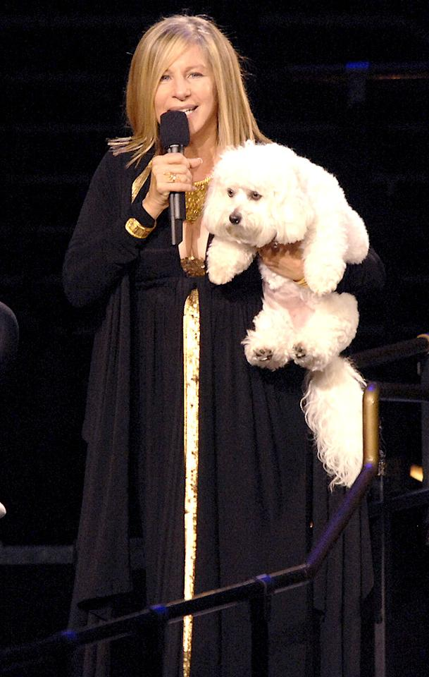 "Barbra Streisand brings her dog Sammie on tour with her. Kevin Mazur/<a href=""http://www.wireimage.com"" target=""new"">WireImage.com</a> - October 4, 2006"