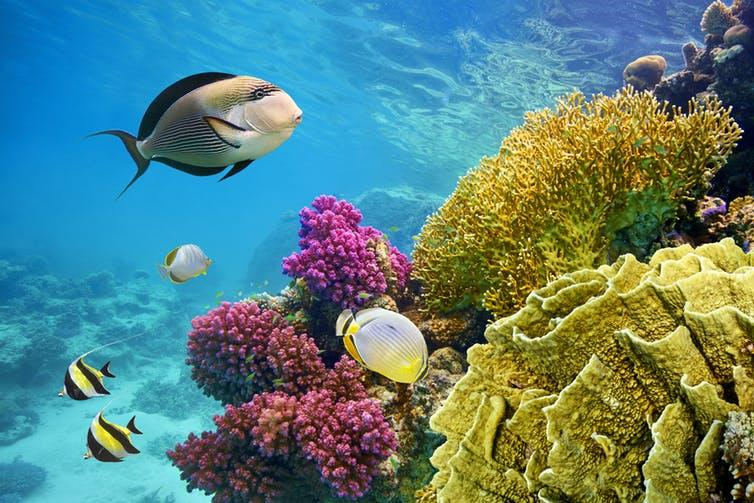 """<span class=""""caption"""">Soon to be aided by 3D printed reef?</span> <span class=""""attribution""""><a class=""""link rapid-noclick-resp"""" href=""""https://www.shutterstock.com/image-photo/underwater-scene-coral-reef-fish-photographed-287417138?src=LmrCZukYbiapJ3adeJhysQ-1-25&studio=1"""" rel=""""nofollow noopener"""" target=""""_blank"""" data-ylk=""""slk:John_Walker/Shutterstock.com"""">John_Walker/Shutterstock.com</a></span>"""
