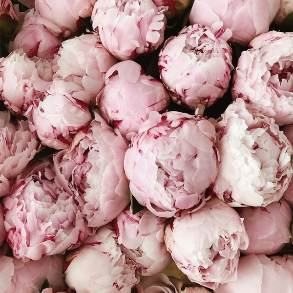 """<p><strong>Invited Blooms </strong></p><p>invitedjournal.com</p><p><strong>$200.00</strong></p><p><a href=""""https://invitedjournal.com/collections/invited-blooms/products/growers-choice-peonies-30-stems"""" rel=""""nofollow noopener"""" target=""""_blank"""" data-ylk=""""slk:SHOP NOW"""" class=""""link rapid-noclick-resp"""">SHOP NOW</a></p><p>Flowers are undoubtedly romantic, but there's no reason they should be reserved solely for the day of your anniversary. Opt for Invited Journal's monthly flower subscription—brought to you by <a href=""""https://www.harpersbazaar.com/wedding/planning/g6965/best-wedding-planners/"""" rel=""""nofollow noopener"""" target=""""_blank"""" data-ylk=""""slk:BAZAAR top wedding planners"""" class=""""link rapid-noclick-resp"""">BAZAAR top wedding planners</a> Matthew Robbins and Luis Otoya—for a whole year of blooms.</p>"""