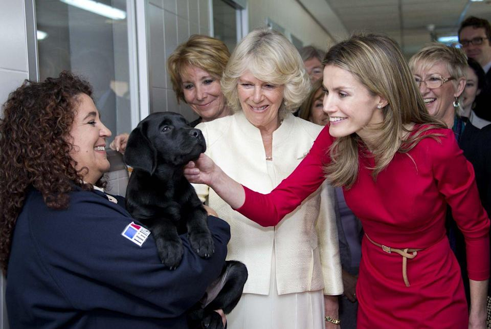 <p>Princess Letizia of Spain and Camilla, Duchess of Cornwall, meet a puppy during a visit the Guide Dogs Centre in Madrid.</p>