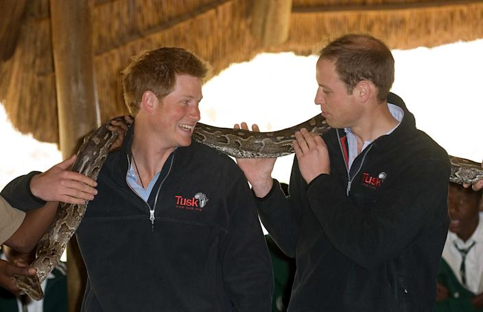 GABORONE - JUNE 15:  Prince William and Prince Harry hold an African rock python when they visit Mokolodi Education Centre on June 15, 2010 in Gaborone, Botswana.  The Princes are on a joint trip to Southern Africa and will visit projects supported by their respective charities Tusk Trust (Prince William) and Sentebale (Prince Harry).   (Photo by Samir Hussein/WireImage)
