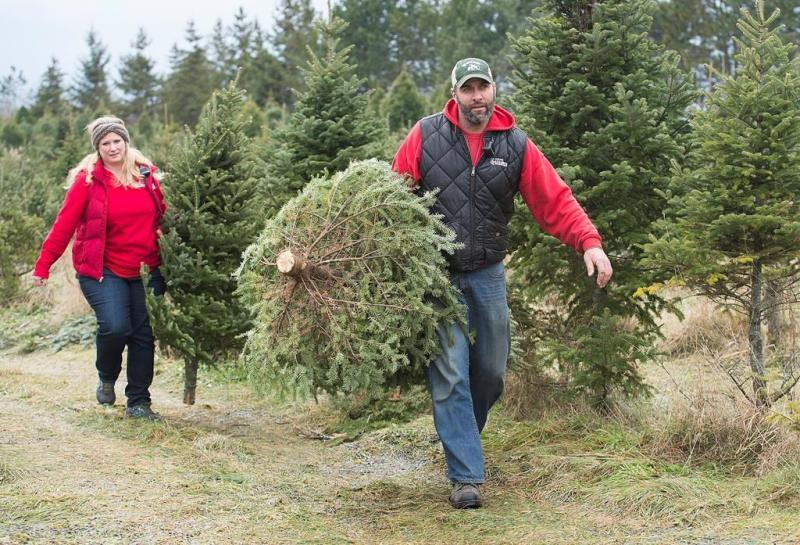 How the financial crisis hit the Christmas tree industry and pushed up prices