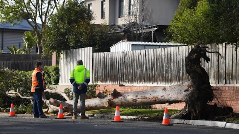Three men in high-vis vests stand next to a fallen tree