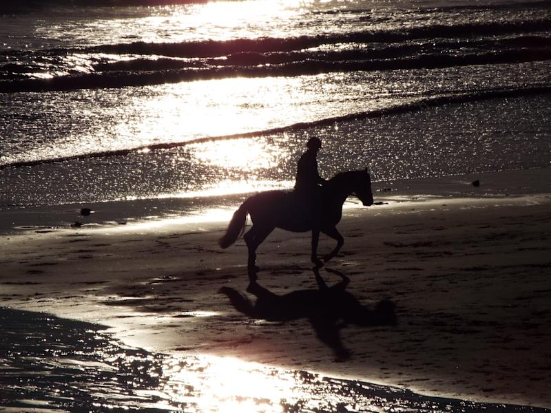 A horse seen at the beach with the sun setting.