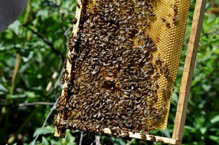 The organization carries out more than 200 bee rescues a year