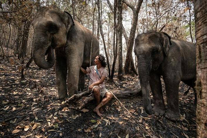 """Around 2,000 elephants are currently """"unemployed"""" as the virus eviscerates Thailand's tourist industry, says Theerapat Trungprakan, president of the Thai Elephant Alliance Association (AFP Photo/Handout)"""
