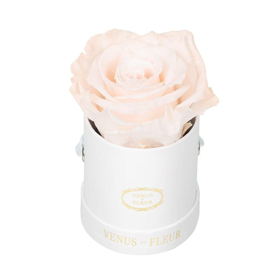 """<p><strong>Venus ET Fleur</strong></p><p>venusetfleur.com</p><p><strong>$39.00</strong></p><p><a href=""""https://go.redirectingat.com?id=74968X1596630&url=https%3A%2F%2Fwww.venusetfleur.com%2Fproducts%3Fbox%3D60016740-4ed7-11e8-acbe-cb6eab732f11%26box_variant%3D8b5181f0-4ed7-11e8-acbe-cb6eab732f11%26stencil%3Dc6f4e200-4ed8-11e8-ada9-016305cd00a5%26flower_one%3Dc45e6a10-cf61-11e9-bc20-81010a8f977e%26flower_two%3D392e6fc0-cf62-11e9-bc20-81010a8f977e%23%2Fsteps%2Farrangement%2Fcolors&sref=https%3A%2F%2Fwww.seventeen.com%2Flife%2Ffriends-family%2Fg29844066%2Fbest-gifts-for-sister%2F"""" rel=""""nofollow noopener"""" target=""""_blank"""" data-ylk=""""slk:Shop Now"""" class=""""link rapid-noclick-resp"""">Shop Now</a></p><p>This one's for the chic sister who's not so easily impressed — she'll fawn over these luxe arrangements.</p>"""