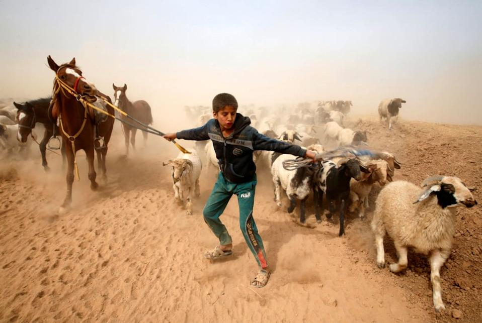 "<div class=""inline-image__caption""><p>A displaced Iraqi boy leads his animals to safety after escaping from Islamic State controlled village of Abu Jarboa during clashes with IS militants near Mosul, Iraq November 1, 2016.</p></div> <div class=""inline-image__credit"">Ahmed Jadallah/Reuters</div>"