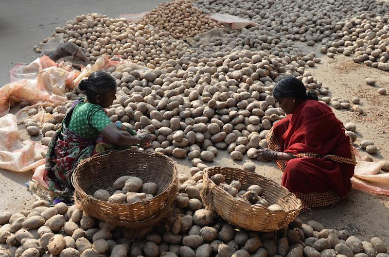 "The potato was selected for the study because it can be grown in many types of soil, in different climates and is resistant to ""drought shocks"" (AFP Photo/MANJUNATH KIRAN)"