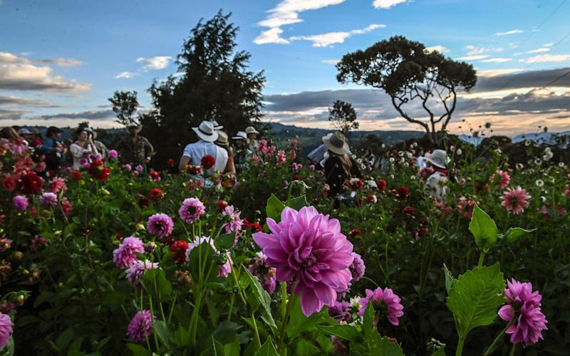 Sant Elena is home to Colombia's foremost flower festival - getty