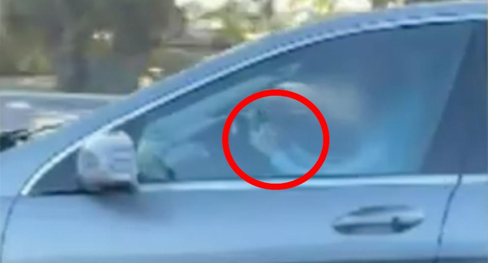 A still from a video of an Adelaide driver allegedly reading a book behind the wheel.