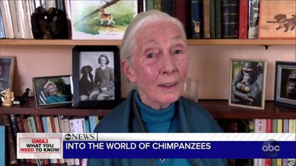"""PHOTO: """"I was born loving animals. My dream of going to Africa and living with them, the wild animals, began when I read Dr. Doolittle and Tarzan when I was 10,"""" Goodall, now 86, told ABC News. (ABC)"""