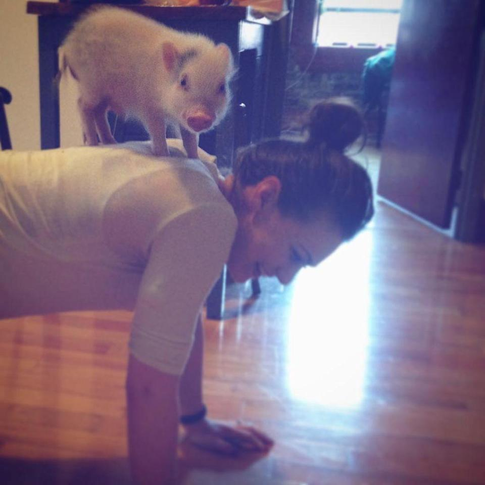 "<p>Trot to your mat with an <a href=""http://www.drozthegoodlife.com/healthy-lifestyle/relationships-pets/a644/hamlet-service-pig-epilepsy/"" rel=""nofollow noopener"" target=""_blank"" data-ylk=""slk:adorable teacup piggy"" class=""link rapid-noclick-resp"">adorable teacup piggy</a> to keep you accountable during your workout.</p>"