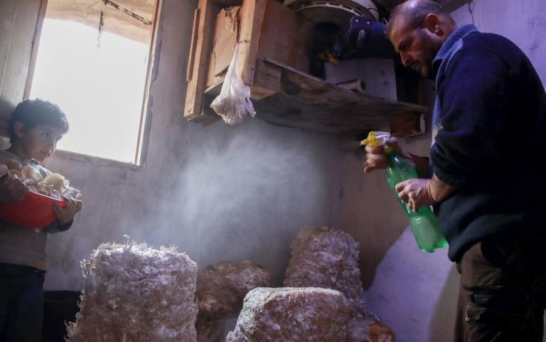 Nasrallah mists the tops of bags filled with wet straw and fungi spores regularly until mushrooms sprout out, which he then harvests to feed his family and sell on