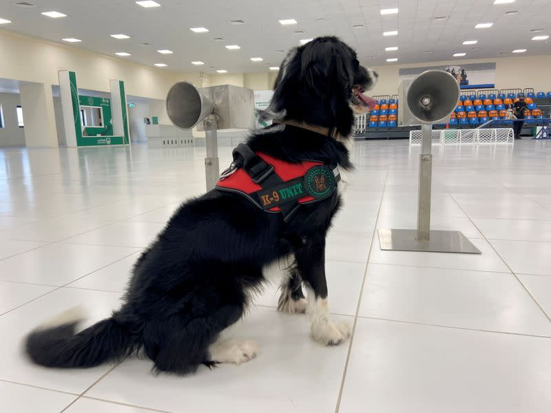 Dubai to deploy sniffer dogs to detect COVID-19 at major events