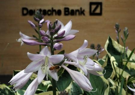 A bee collects pollen at a flower near a Deutsche Bank office in London