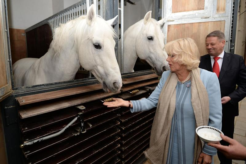 Royal visit: The Duchess of Cornwall meets horses at the Spanish Riding School in Vienna: Getty Images