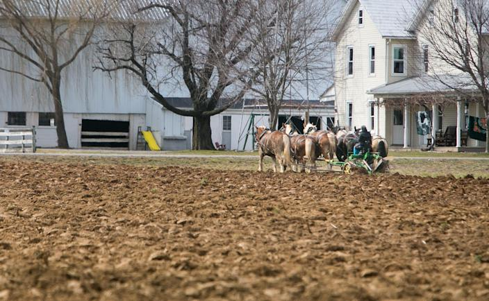 An Amish farmer in Narvon, Pennsylvania, plows his field with a team of horses.