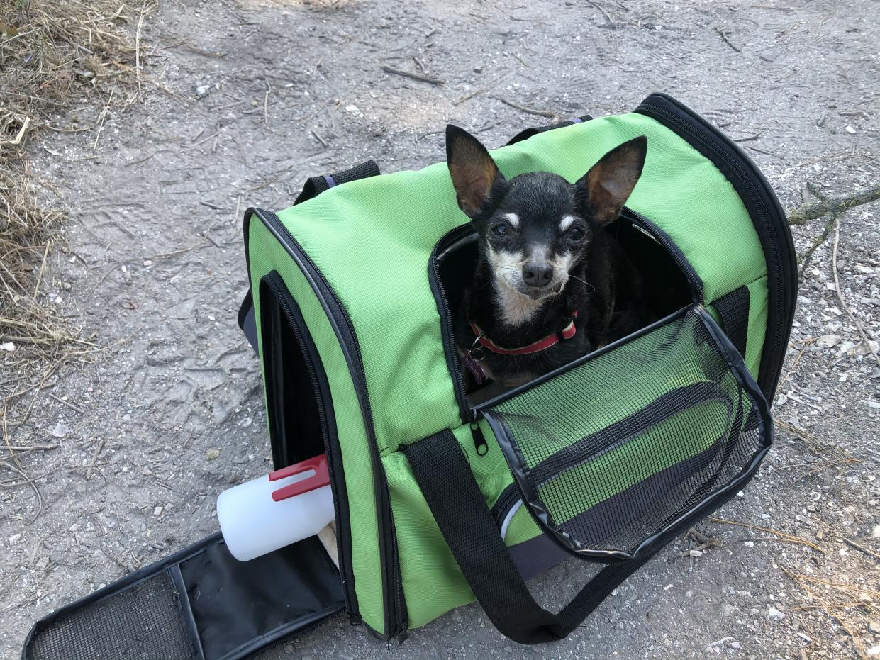 Kismet travels in a green dog carrier.