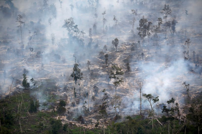Indonesia gets U.N. funds to fight climate change, deforestation