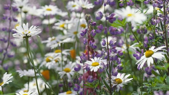Where to see wildflower meadows