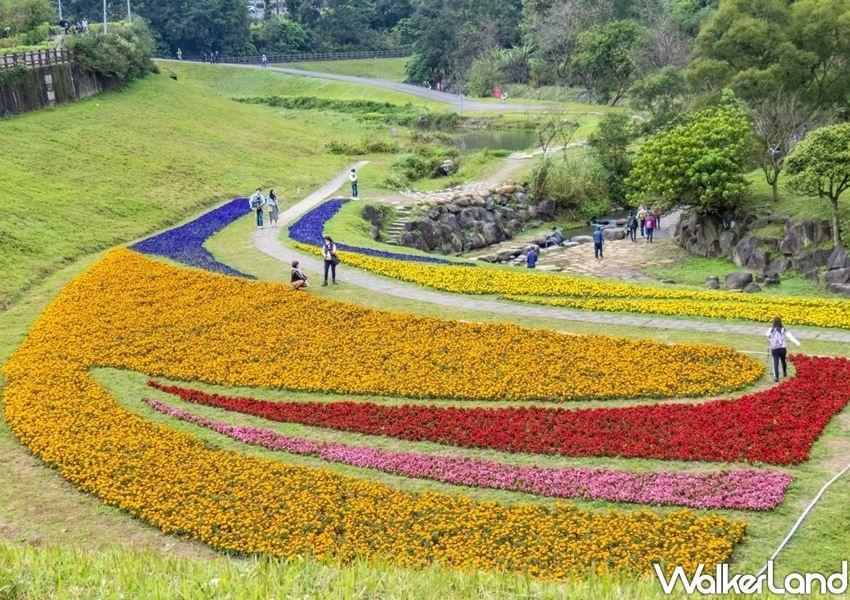 The sea of flowers, which goes in full bloom in February, has become an annual attraction for the locals as well. (photo courtesy of Taipei Walker)