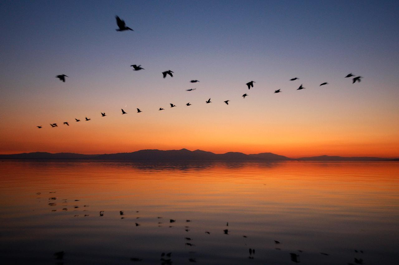 """CALIPATRIA, CA - JULY 2:  Pelicans fly to Mullet Island, one of the four Salton Buttes, small volcanoes on the southern San Andreas Fault, after sunset on July 2, 2011 near Calipatria, California. Mullet Island, the only place for many thousands of island nesting birds to breed at the Salton Sea, will become vulnerable to attacks by predators such as raccoons and coyotes if the water level drops just a couple more feet. Scientists have discovered that human-created changes effecting the Salton Sea appear to be the reason why California's massive """"Big One"""" earthquake is more than 100 years overdue and building up for the greatest disaster ever to hit Los Angeles and Southern California. Researchers found that strands of the San Andreas Fault under the 45-mile long rift lake have have generated at least five 7.0 or larger quakes about every 180 years. This ended in the early 20th century when authorities stopped massive amounts of Colorado River water from periodically flooding the into this sub-sea level desert basin. Such floods used to regularly trigger major quakes and relieve building seismic pressure but the last big earthquake on the southern San Andreas was about 325 years ago. Dangerous new fault branches that could trigger a 7.8 quake have recently been discovered under the Salton Sea.  (Photo by David McNew/Getty Images)"""