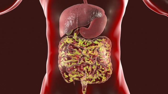 """<span class=""""caption"""">The microbes living in the gut are key to good health.</span> <span class=""""attribution""""><a class=""""link rapid-noclick-resp"""" href=""""https://www.gettyimages.com/detail/photo/intestinal-microbiome-medical-concept-royalty-free-image/1196631894?adppopup=true"""" rel=""""nofollow noopener"""" target=""""_blank"""" data-ylk=""""slk:Dr_Microbe/iStock/Getty Images Plus"""">Dr_Microbe/iStock/Getty Images Plus</a></span>"""
