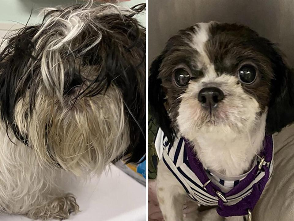 """<p>Barbie was found as a stray, with her dog beau Ken (of course), severely matted and filthy. A thorough grooming revealed the gorgeous gal underneath, and boosted Barbie's confidence. After her makeover, Barbie comforted Ken through amputation surgery and recovery and the canine couple was adopted together from <a href=""""https://www.lehighcountyhumanesociety.org/"""" rel=""""nofollow noopener"""" target=""""_blank"""" data-ylk=""""slk:Lehigh County Humane Society"""" class=""""link rapid-noclick-resp"""">Lehigh County Humane Society</a> in Allentown, Pennsylvania.</p>"""