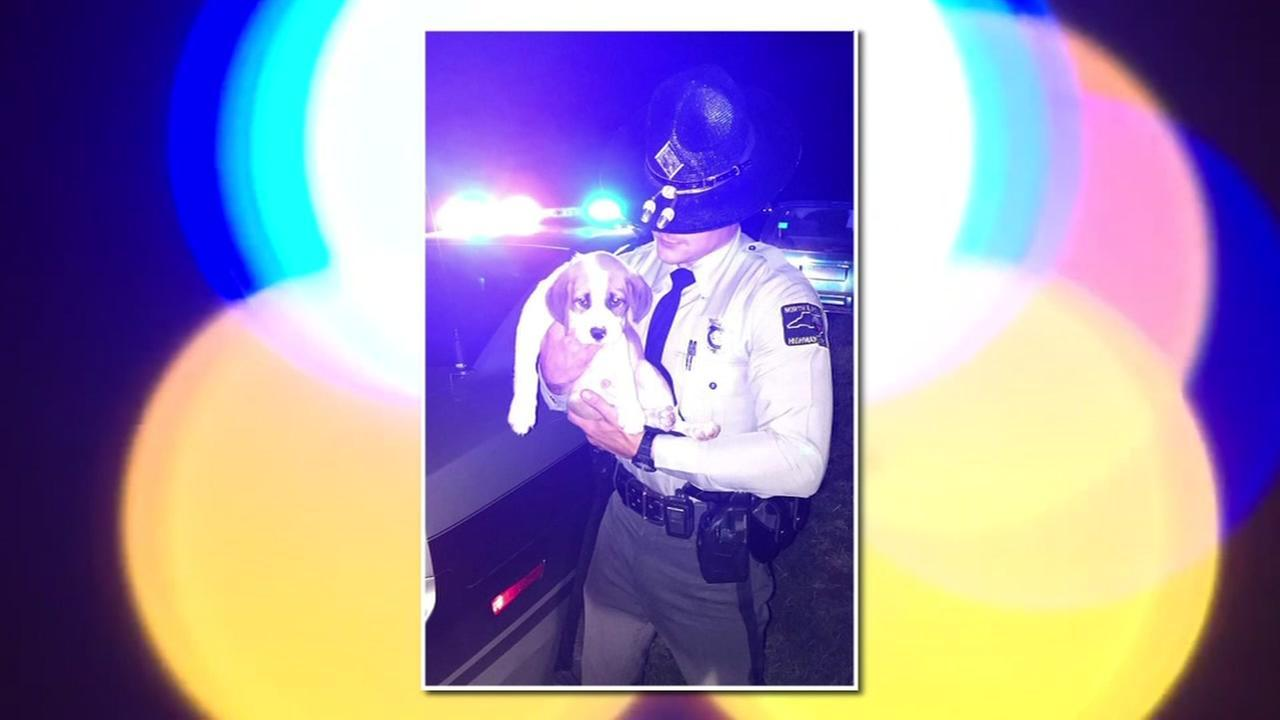 A North Carolina state trooper in Johnston County rescued a puppy named Luie after arresting an impaired driver at a traffic stop Saturday.